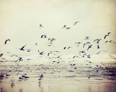 Seagulls photograph - beach soft neutral gray birds earthtones seascape pale mauve lavender beige