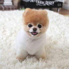 I need this puppy soooooo cute