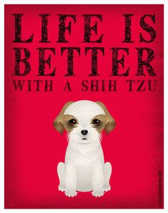 Life is better with a shih tzu