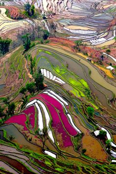 Texture, movement, color, pattern! -Terraced Rice Field, China by Thierry Bomier