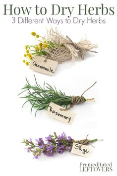 How to dry herbs and flowers using 3 different methods - hanging herbs to dry, how to microwave herbs to dry them, and how to dry flowers in books. Hanging Herbs, Decoration Plante, Growing Herbs, Medicinal Plants, Herbal Medicine, Dried Flowers, How To Dry Flowers, Fresh Herbs, Gardening Tips