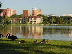 Lakeland, FL our winter home