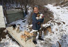 """Na Coreia do Sul, ainda é prática comum criar e matar cachorros para comer. Nos últimos anos, as novas gerações têm tentado mudar isso e já se tornou menos """"excêntrico"""" ter um cão de estimação. Porém, não são só os jovens a seguir na contramão. Jung Myoung Sook tem 61 anos e muito amor para dar. Ela decidiu dedicar sua vida aos animais e há 26 anos que trabalha para resgatar e cuidar de cachorros a caminho dos pratos servidos em restaurantes do país. Uns são resgatados das ruas, outros ela…"""