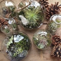 Lots of perfect gifts around here!! Visit us tomorrow @startonthestreet!!!! #terrarium #airplant #shopwoo #moss #terrariums