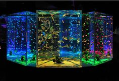 Cool fish tank to show the kiddos one day