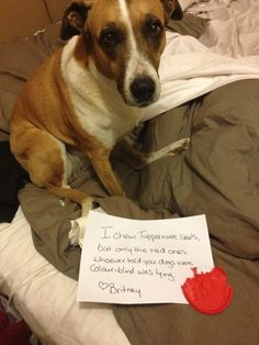 """I chew Tupperware seals, but only the red ones. Whoever told you dogs were color-blind was lying. -Britney"" ~ Dog Shaming shame - Tupperware's guarantee doesn't cover this…"