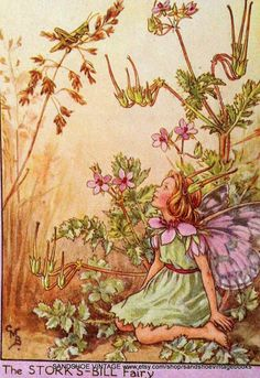 This is a delightful print of a beautiful ' flower fairy' by the early 20th Century artist, Cicely Mary Barker! Description from etsy.com. I searched for this on bing.com/images