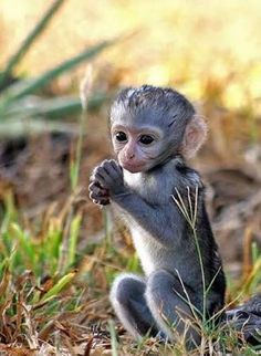 Cute Baby Monkeys The 21 Most Adorable And Cute Baby