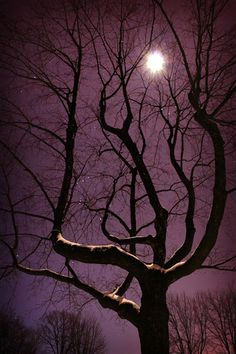 Beautiful purple night sky with the moon gleaming down onto the tree to give it a dazzling look Beautiful Moon, Beautiful World, Nature Sauvage, Shoot The Moon, Samhain, Stars And Moon, Night Skies, Mother Nature, Beautiful Pictures