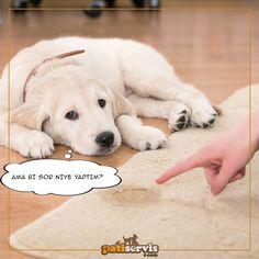 Köpeğiniz herhangi bir kuralı ihlal ettiğinde onu suçüstü yakalamadığınız sürece azarlamamalısınız.