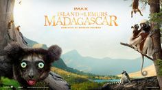 Download .torrent - Island Of Lemurs Madagascar 2014 - http://torrentsmovies.net/adventure/island-lemurs-madagascar-2014.html