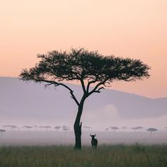 Such a beautiful photo, it doesn't even look real!  Maasai Mara (known by the locals as The Mara) is a large game reserve in Narok County, Kenya.  It is globally famous for its exceptional population of Masai lions, African leopards and Tanzanian cheetahs, and the annual migration of zebra, Thomson's gazelle, and wildebeest to and from the Serengeti every year from July to October, known as the Great Migration. ��: @helloemilie  #travel #travellight #travelwithkids #traveltheworld…