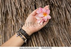 Three pink frangipani flowers in the girl's hand with the bracelet and watch in the Botanical Garden of Madeira. There are thatch roof In the background.