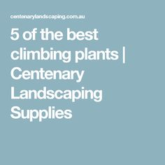 5 of the best climbing plants | Centenary Landscaping Supplies