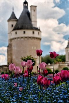 Springtime at Chateau Chenonceaux, France