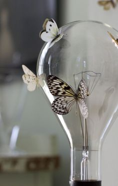 Cute idea - could use paper moths - print out photos of them, cut out, and bend at the center. Glue on gently.