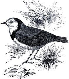 Royalty Free Bird Image