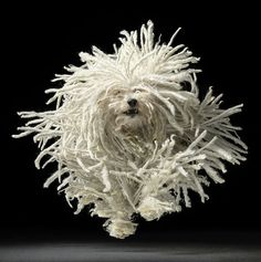 By photographer Tim Flach; I can't recall what kind of dog this is, but they are so cool looking