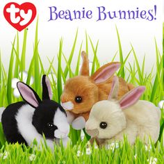Hop on over to the Ty Store to find these Easter Beanie Bunnies, Checkers, Creampuff and Sweetie Pie!