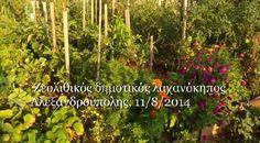 Ζεολιθικός δημοτικός λαχανόκηπος Αλεξανδρούπολης 11/8/2014.