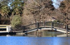 Hampton Park and Maple Street photographs in Charleston, SC