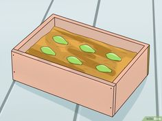 How to Propagate Succulents from Leaves: 14 Steps (with Pictures)