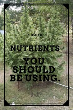Find Tips, Tricks and Information on websites paying money online. Growing Gardens, Led Grow, Online Jobs, Being Used, Gardening Tips, How To Get, Hacks, Cannabis, Life