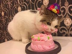 We can only dream of one day being as happy as this cat enjoying a birthday cake