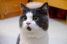 most-popular-cats-banye-omg-cat-2