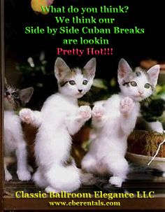 Silly Ballroom Kitty Photo of the Week 1/23/15