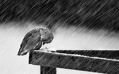 https://4.bp.blogspot.com/-c3ViZICek4o/WMU_tT8hmVI/AAAAAAAARJI/wOjmReaC8xQBA_5XHsGwwTiMHdzGWlFlACLcB/s1600/rain%2B15.jpg