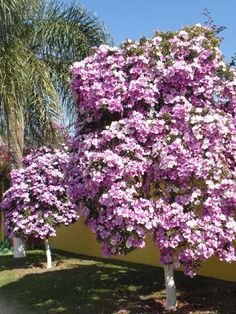 Small flowering trees are perfect ingredients for landscaping. Changes in season definitely make flowering trees the focal point of landscaping. Blooming Trees, Flowering Trees, Trees And Shrubs, Small Vegetable Gardens, Vegetable Garden For Beginners, Front Yard Design, Outdoor Garden Decor, Colorful Trees, Garden Pictures