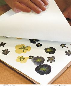 Pressing Flowers - Click Through For Instructions.