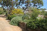 Win and Jim Main's Garden