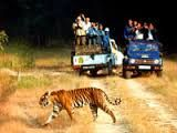 jim Corbett tours