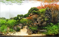 2015 AGA Aquascaping Contest - Entry #478