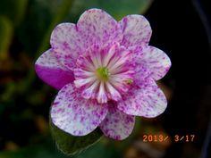 www.asahi-net.or.jp ~yq3m-kr 13e-3-17.jpg