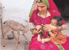Woman Breastfeeding Fawn Wins Photo Award
