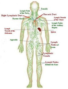 lymph nodes and charts on pinterest : lymphatic diagram - findchart.co