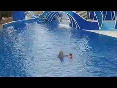atraksi lumba - lumba yang imut lucu dan menarik