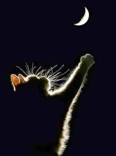 I want the moon