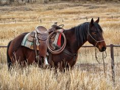 ranch horse. cow pony. western tack. rope. pasture.