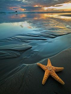 ❥ ocean, starfish, sunset