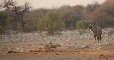 Uk Trip, Wildlife Photography, Safari, National Parks, September, Lunch, Travel, Animals, Instagram
