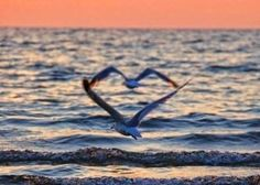 Sea Gulls unknowingly form a heart. 20 Perfectly Timed Breathtaking Pictures - Part II Heart In Nature, Heart Art, Images Lindas, Cool Photos, Beautiful Pictures, Funny Photos, Epic Photos, Beach Photos, Funny Images