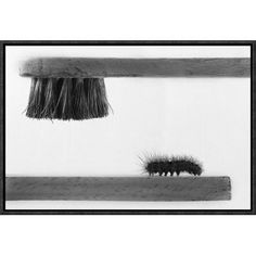 """Global Gallery 'Dear Friend' by Stefano Mallus Framed Photographic Print Size: 20"""" H x 30"""" W x 1.5"""" D"""