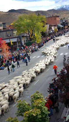 #TrailingoftheSheep Festival in October.  You really need to see it. | #Ketchum #Idaho | Visitidaho.org