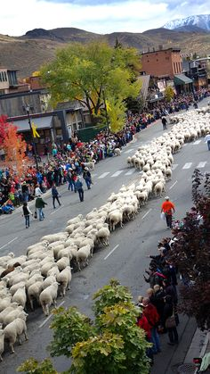 #TrailingoftheSheep Festival in October.  You really need to see it. | #Ketchum #Idaho | Visitidaho.org