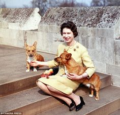 On patrol: The Queen with her corgis at Windsor Castle in 1962.
