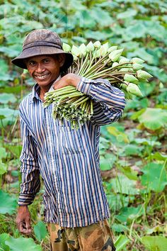 Farmer with lotus flowers   Siem Reap Province, Cambodia   Flickr - Photo Sharing!